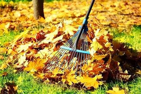 Yard Clean Up & Lawn Maintenance | DIY: True Value Projects