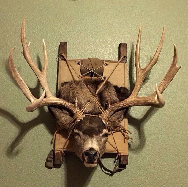 Learn deer antler crafts diy