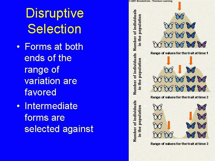 disruptive.gif