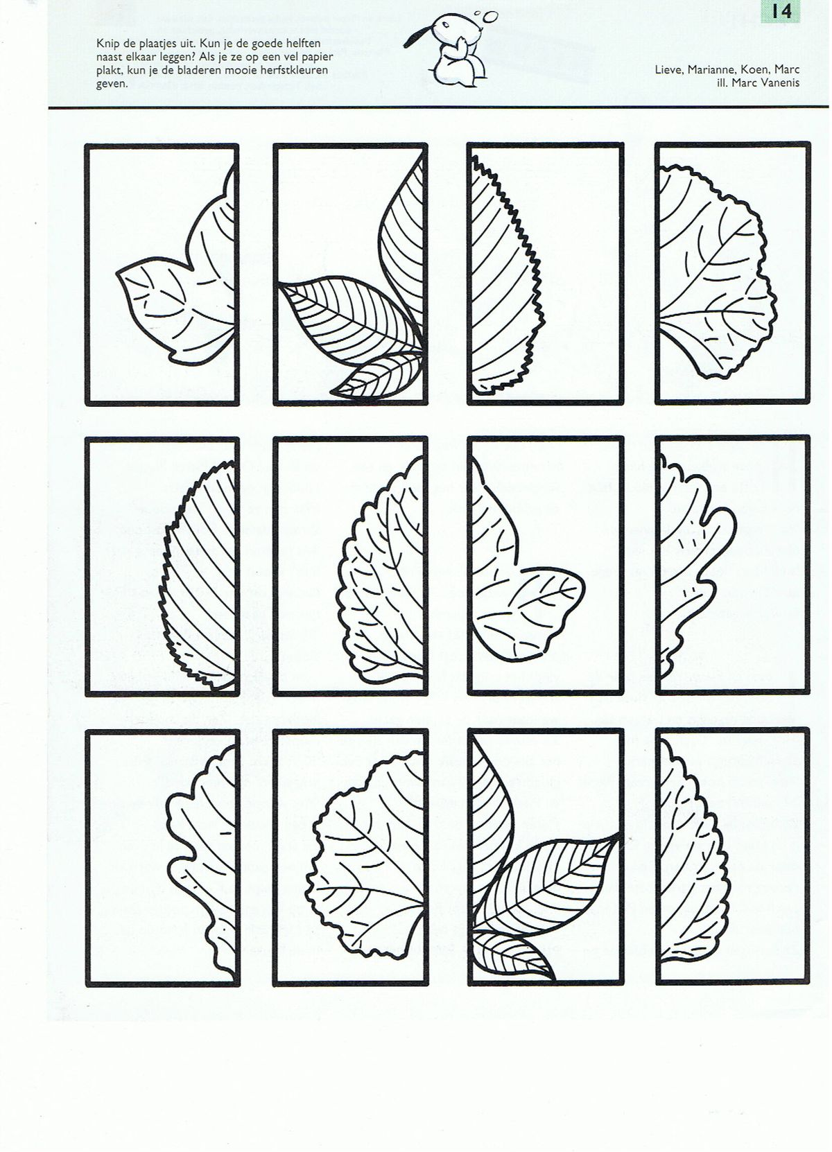 1000 images about preschool trees on pinterest leaf prints life cycles and apple unit. Black Bedroom Furniture Sets. Home Design Ideas