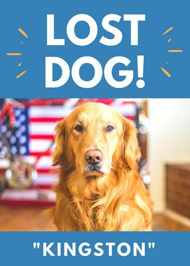 Blue and Orange Lost Dog Flyer - Templates by Canva