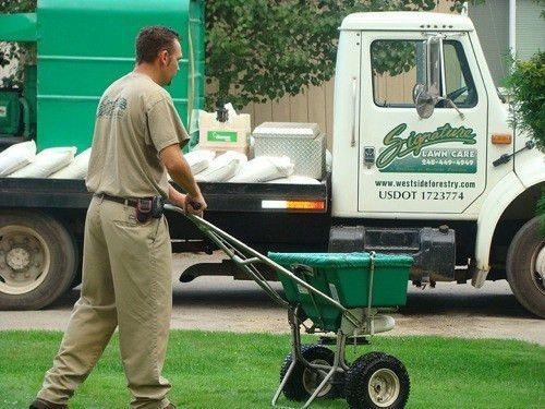 Tree and Lawn Care Portfolio | Michigan Tree & Lawn Company