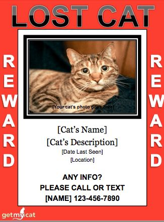 Missing Cat Template. missing pet poster template how to create a ...