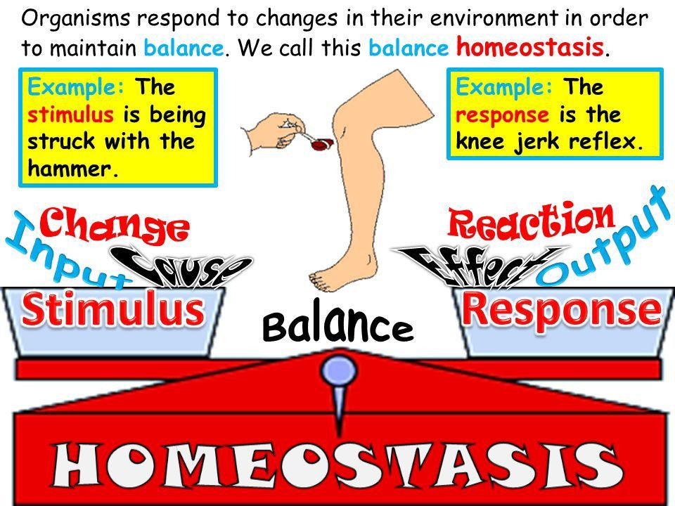 You just experienced homeostasis. Your body was trying to keep you ...