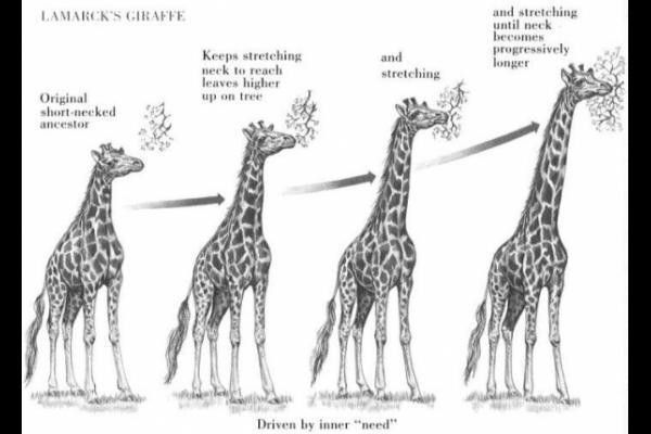 Quinton Gierach's explanation of Evolution