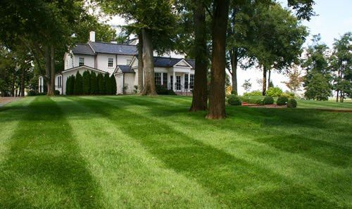 The green mountain lawn care services