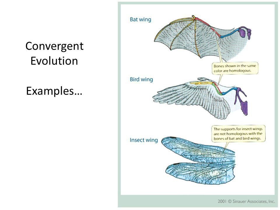 Unit 8 Evolution Notes Part 4: Patterns of Evolution & Evidence ...