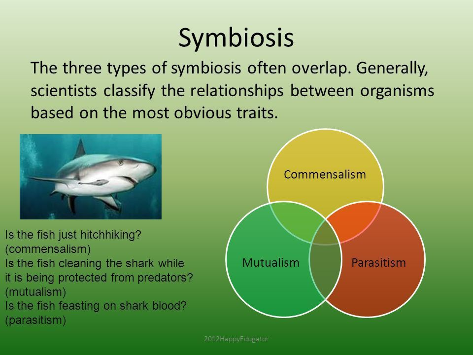 Symbiosis and Symbiotic Relationships - ppt video online download