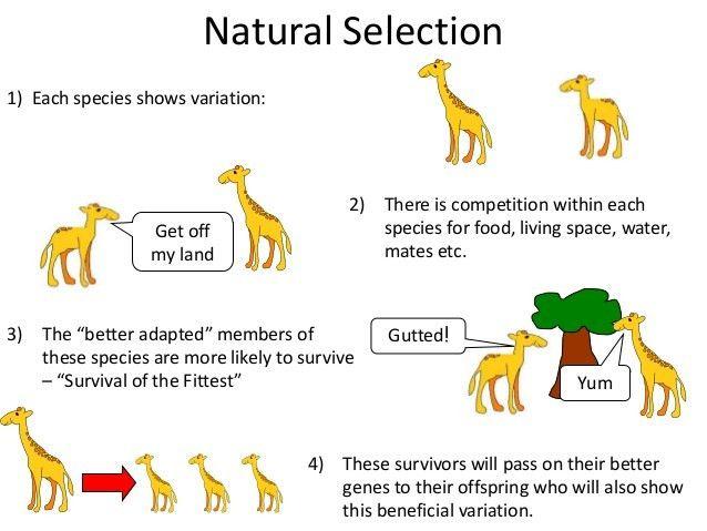 "Natural Selection | Biology Revision for ""O"" level examinations"