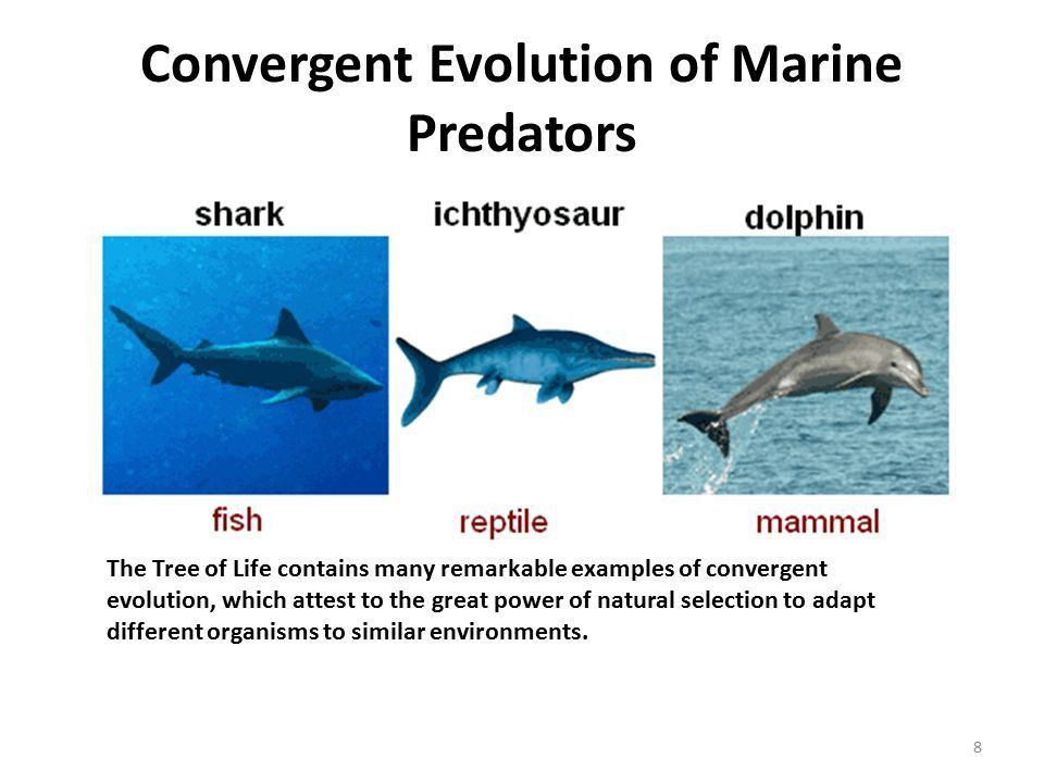 Ecology and Evolution: the Creation of Biodiversity ppt download