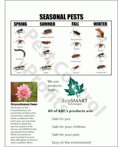Master Package | How to Start a Pest Control Business