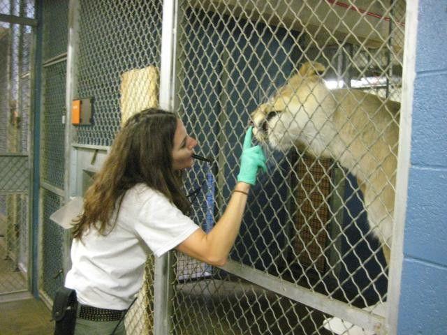 National Zoo keeper trains top predator and prey | Scripps Howard ...