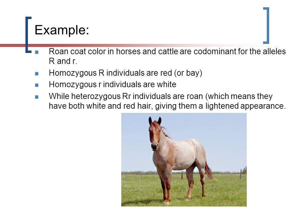 Genetics: Incomplete Dominance & Codominance Biology ppt download