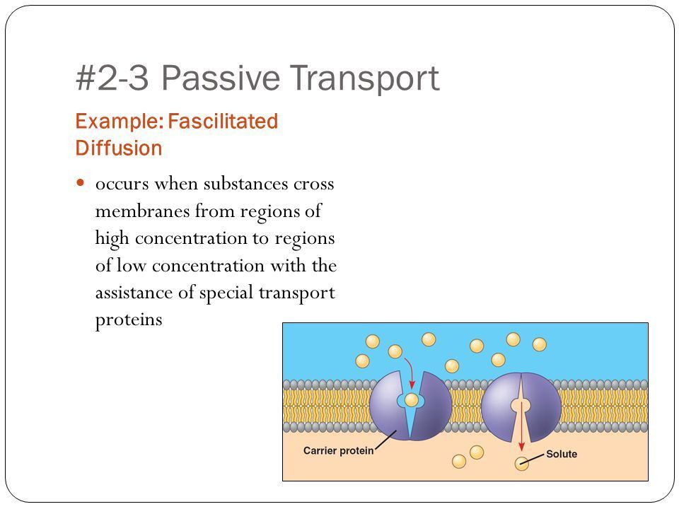Topic: Cell Processes / Achieving Homeostasis AL Biology COS #2 ...