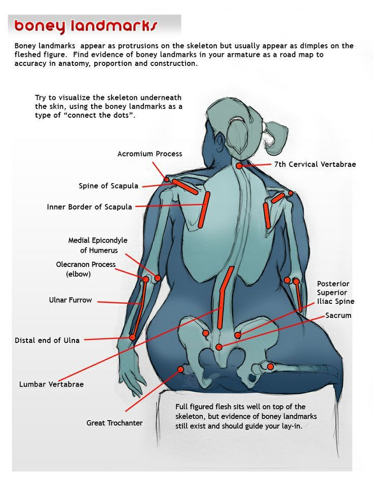 481 best Character Anatomy images on Pinterest | Drawing tutorials ...