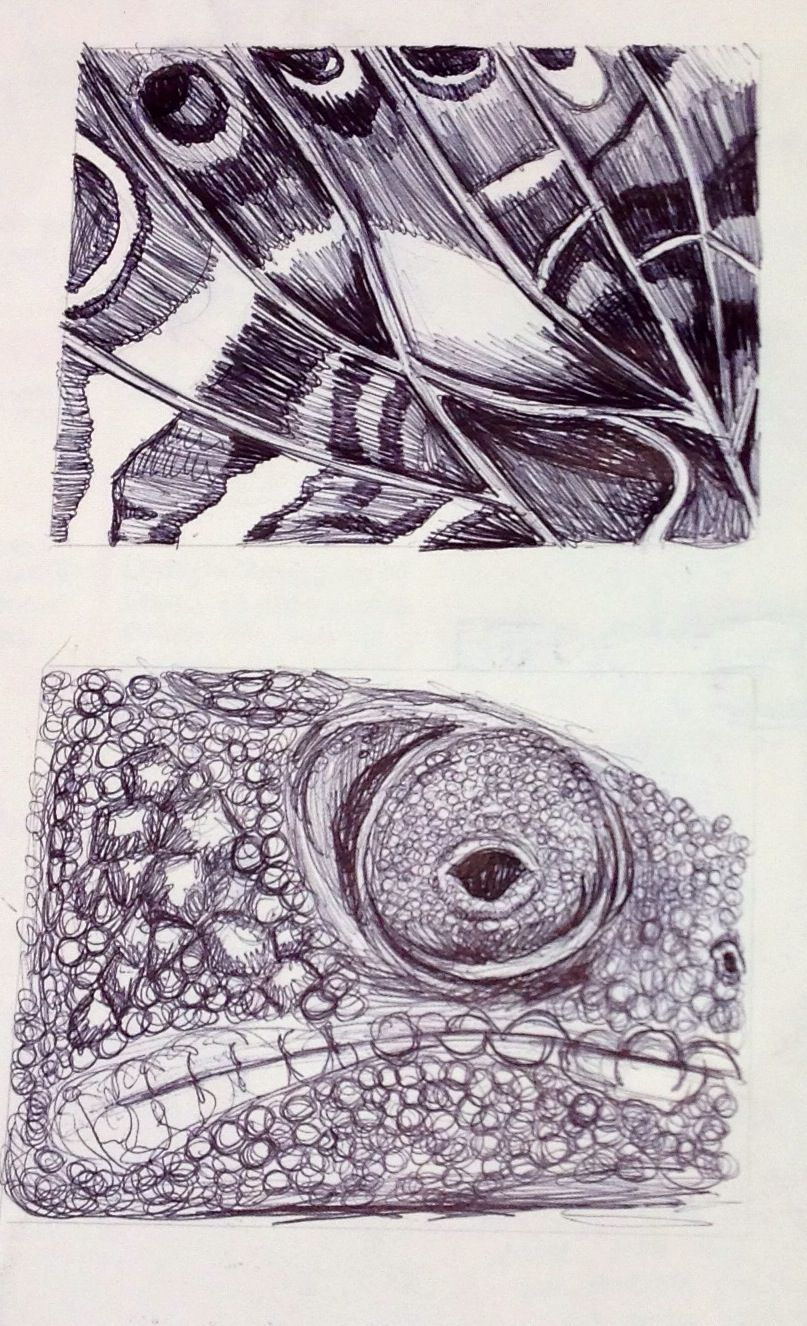 Line Drawing Natural Forms : Images about natural form project ideas on pinterest