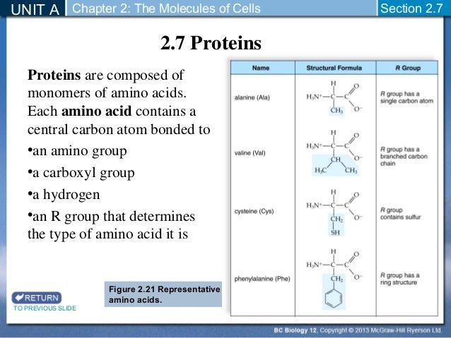 Biology 12 - Chemistry of Proteins - Section 2-7 and 2-8