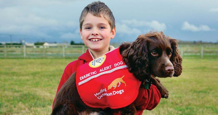 Extraordinary Dogs: Medical Alert Assistance Dogs