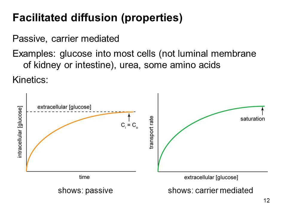 Intracellular vs. extracellular concentrations - ppt video online ...