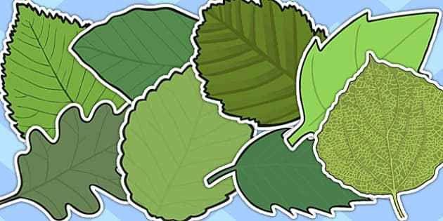 Editable Leaf Template - Ecordura.com