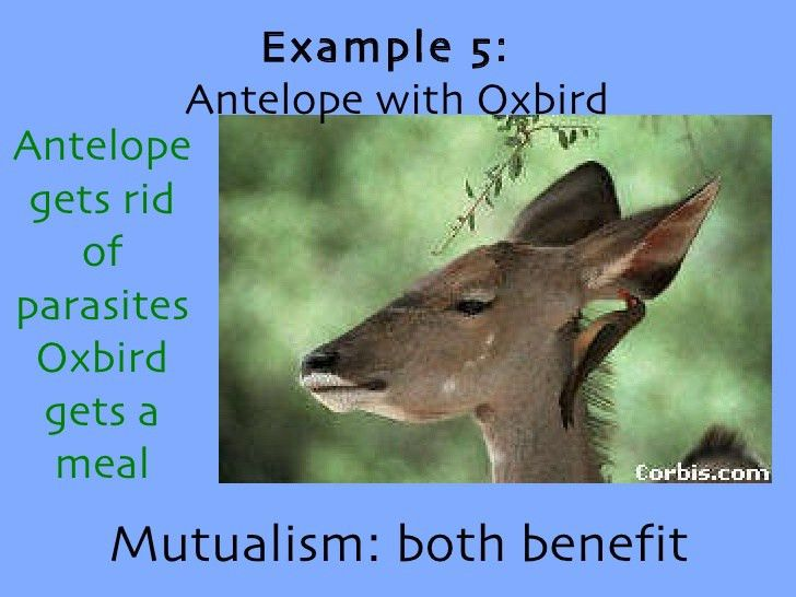 Symbiotic relationships ch18, sxn3 part 2 qw
