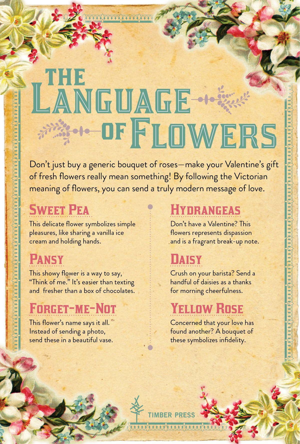 Language Of Flowers Language And Flower On Pinterest