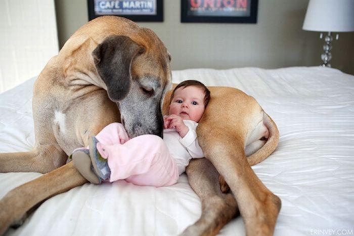 Babysitter Dog – 1Funny.com