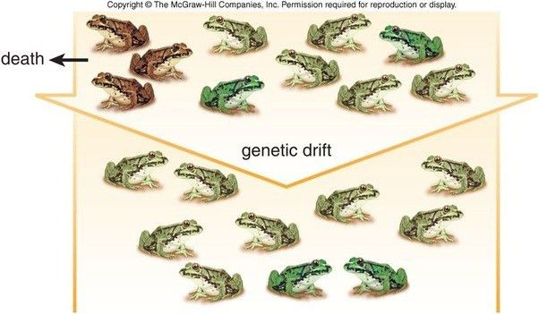 The difference between mutation and genetic drift - Quora