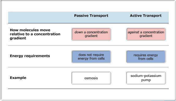 Differences between active and passive transport | StudyBlue