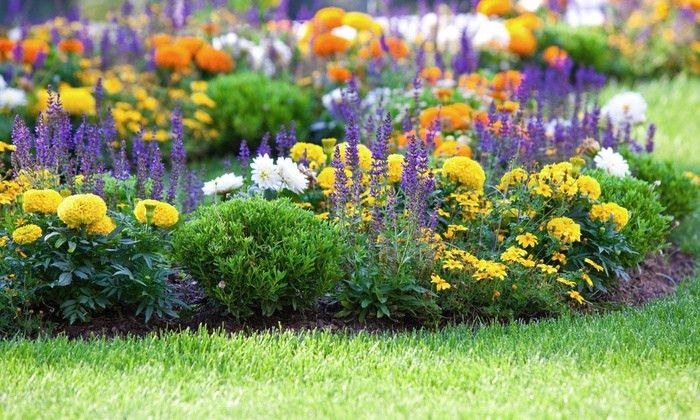 Lawn and Garden Care - Slyte Lawn Care Services | Groupon
