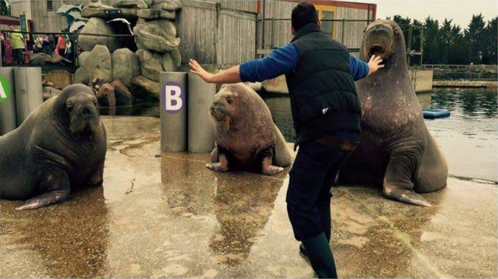 Zookeepers are Recreating Chris Pratt's Moves in JURASSIC WORLD ...
