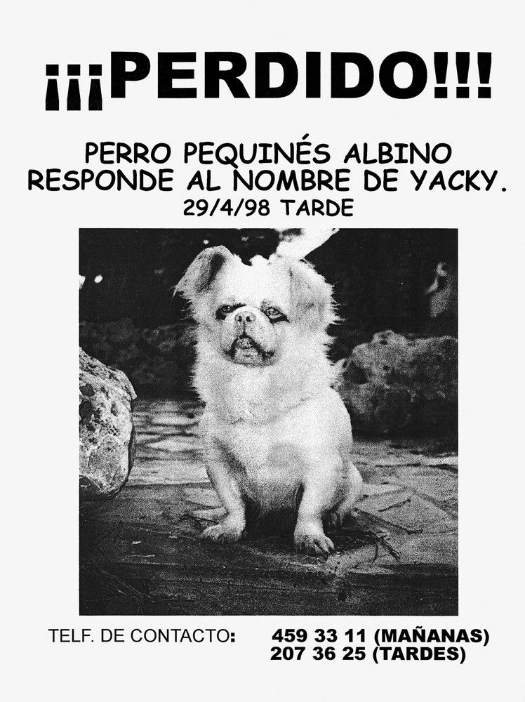 Examining The All Too Overlooked Art Of The Lost Pet Poster   HuffPost