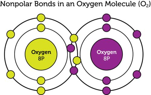 Covalent Bonds | CK-12 Foundation