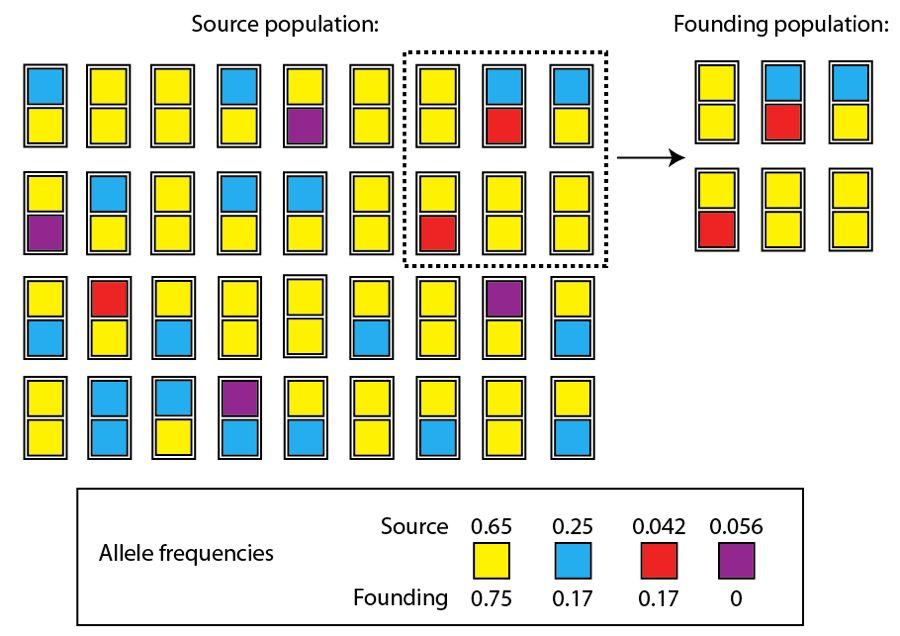 Evolution Basics: From Variation to Speciation, Part 2