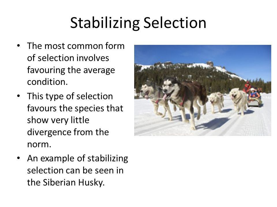 Evolution and Natural Selection - ppt video online download
