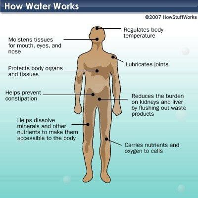 Human Biology Online Lab / Homeostasis Lab 3