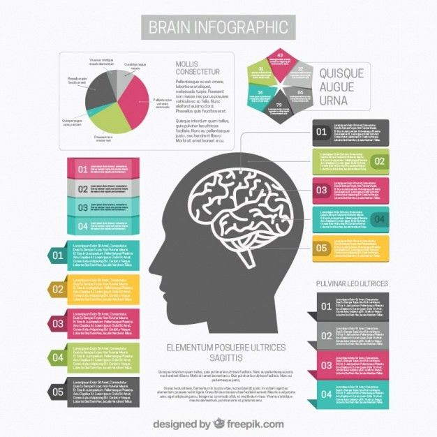 Brain infographic template with graph and different options Vector ...