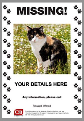 21+ Free Missing Cat Poster Template - Word Excel Formats