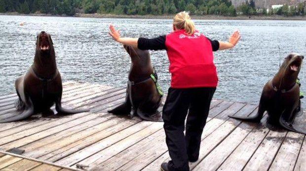 Zookeepers recreate cheesy Jurassic World raptor-training scene ...