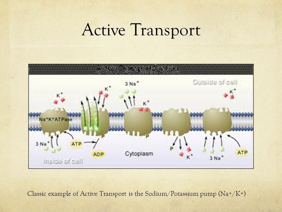 Cellular Transport. Homeostasis All the previous topics discussed ...