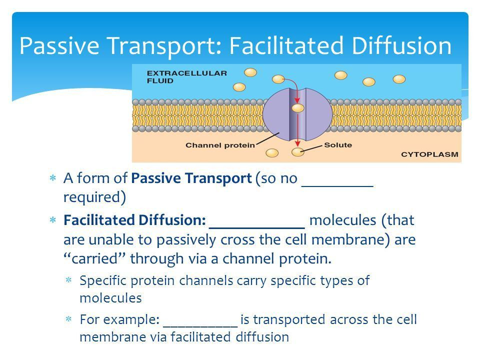 Cell Membrane. Cell Membrane? Location?  the cell Function? 1 ...