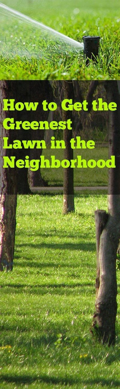 Tips and Tricks for Getting the Greenest Lawn in the Neighborhood ...