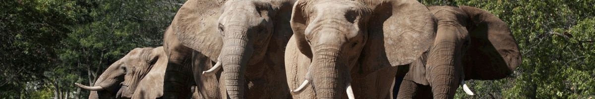 Careers & Jobs | Kansas City Zoo