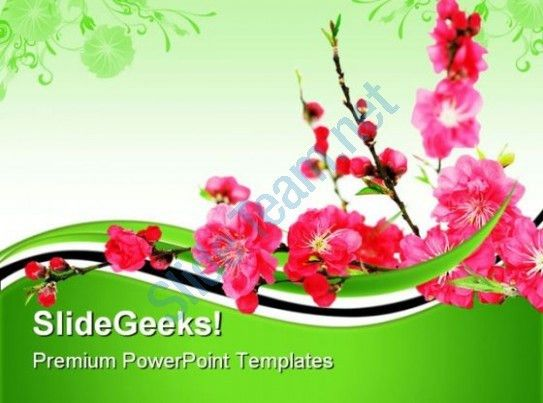Spring Cherry Flowers Nature PowerPoint Templates And PowerPoint ...