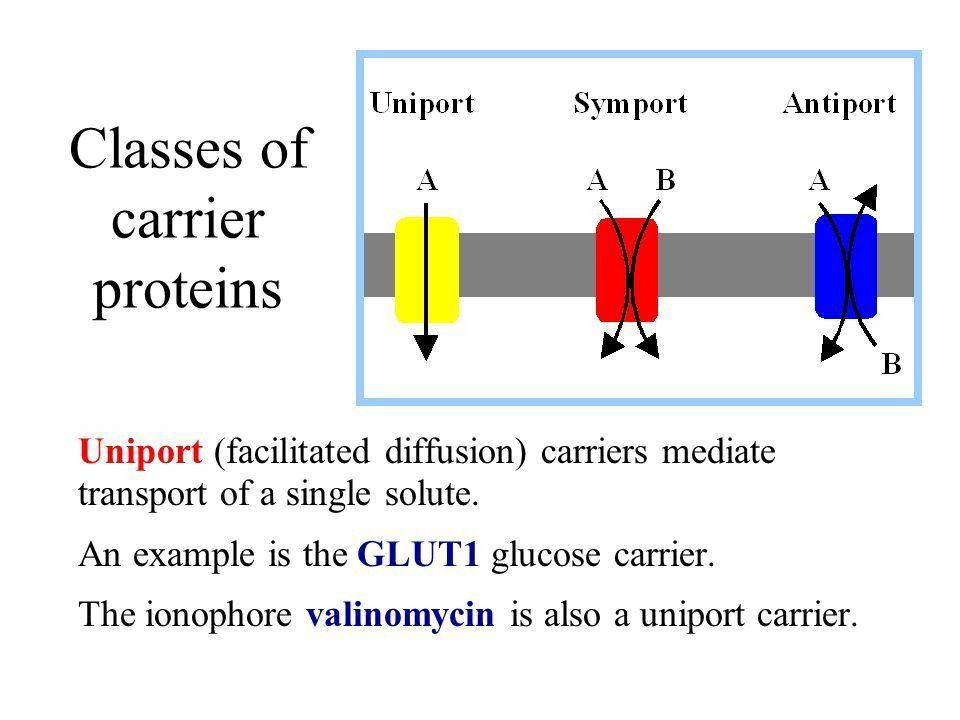 Membrane Transport Biochemistry of Metabolism - ppt video online ...