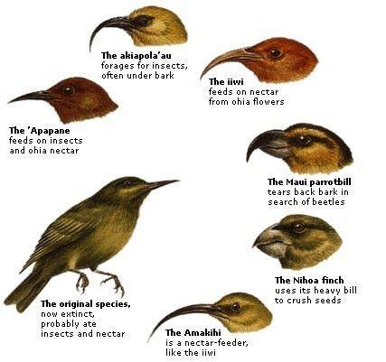 Examples of convergent and divergent evolution - Quora