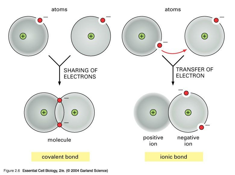 Covalent Bonding - Chemistry | Socratic