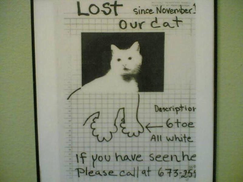 Lost pet posters - Kokochi