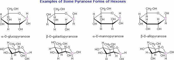 25.5 Cyclic Structures of Monosaccharides: Anomers - Chemistry ...