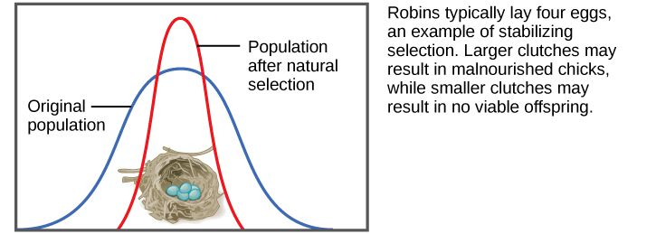 Adaptive Evolution | Biology for Majors II